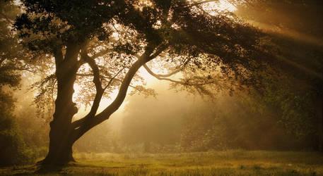 Summer longings by Northstar76