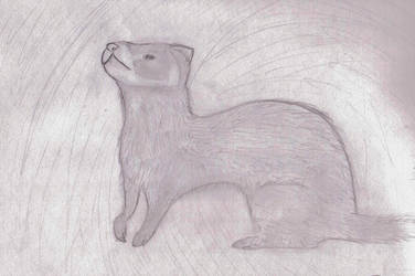 Realistic ferret commission ex by kittykatz55