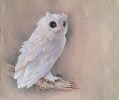 White Owl Study by ElliAdams