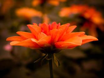 Autumn Bloom by SanguineWinds