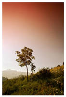 Jungle Mountain by leonard-ART