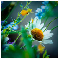 GardenLand by leonard-ART