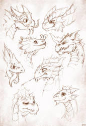 Baby Dragon Sketches by SPipes
