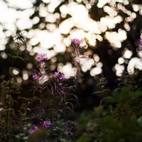 lovely air so thin. by gloeckchen