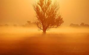 Golden Morning by markborbely