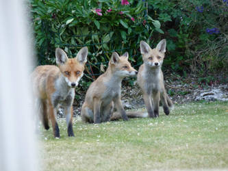The Family Foxy by MilesKjeller