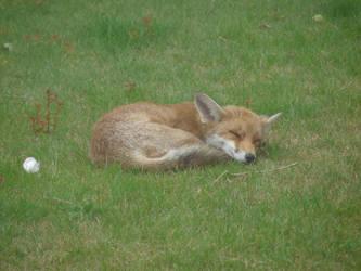 Having a Snooze by MilesKjeller