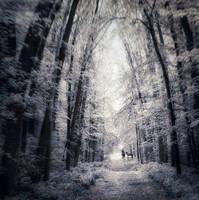 through the forest by ailenn