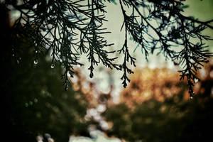 Autumn Rain by GoldenYak9753