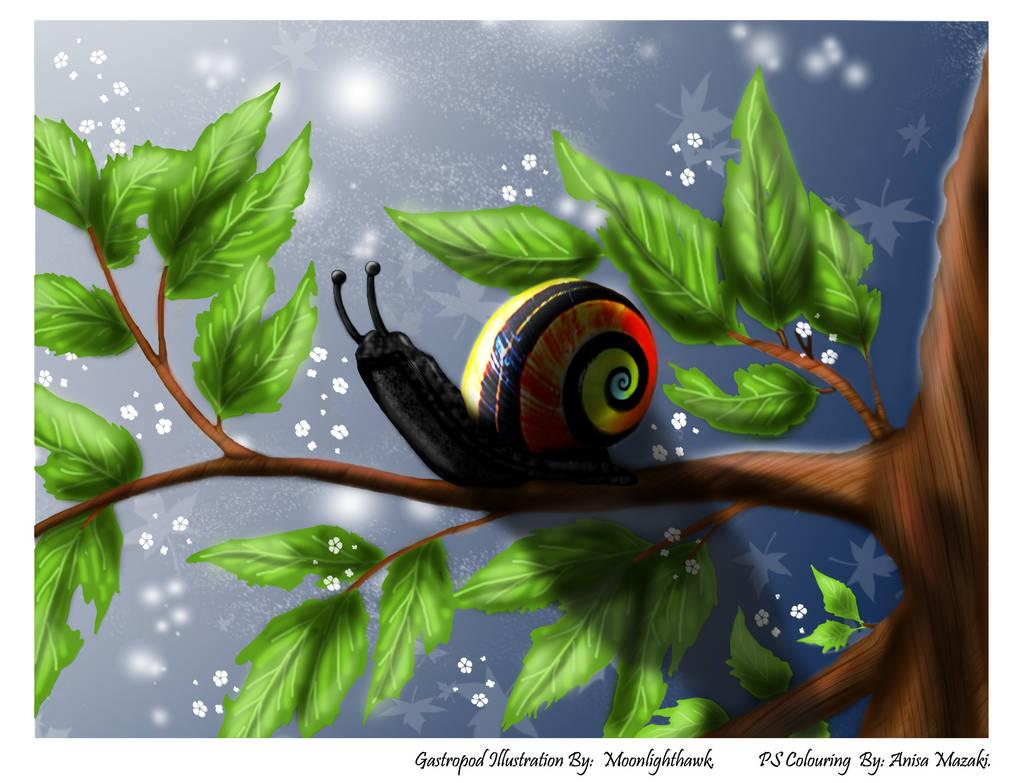 Moonlighthawk's Gastropod - Coloured by Anisa-Mazaki
