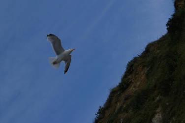 Seagull by Samael94