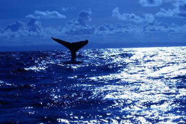 Humpback Whale by Samael94