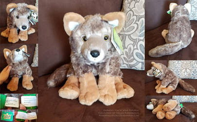 Darwin's Fox by Wild Republic by AhrendalePlush