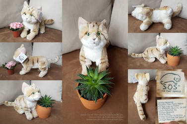 SOS Sand Cat by AhrendalePlush