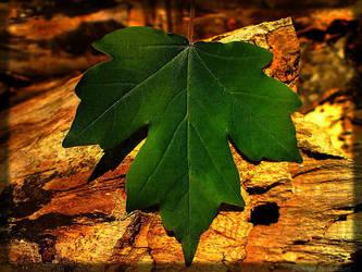 leaf by lonelymount