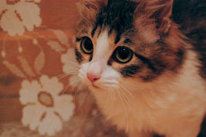 My little cat by NaViGa7or