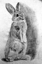 Rabbit by AgentBurn