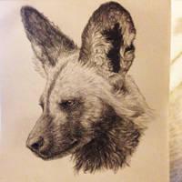 African Wild Dog Portrait by cricketmilk