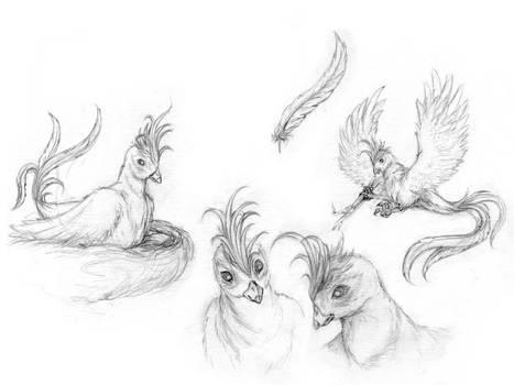 character-study - bird - by Taleea