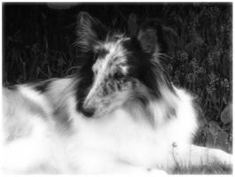 My puppy Alli by Annemari