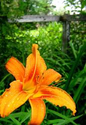 Floralis : Le Tigre 2 by corvidophiliac