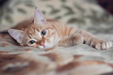 Tabby Cat IV by Patholesia