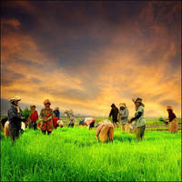 petani2 cantik by Jayantara