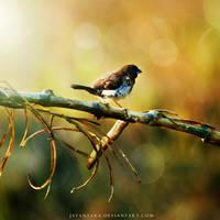 not my bird by Jayantara