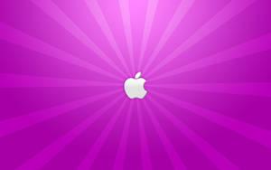 A Purple Apple by yc