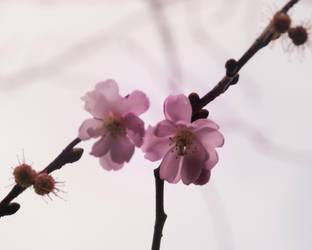 Flowers by xxchelsea19981