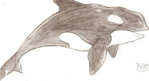 My Orca by Aric414