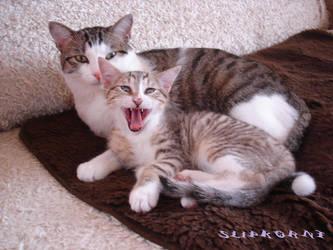 My cats, Fieldy And Zeppelin by SlipKoRnT