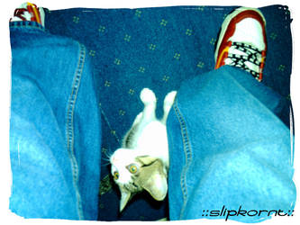 Fieldy and Me by SlipKoRnT
