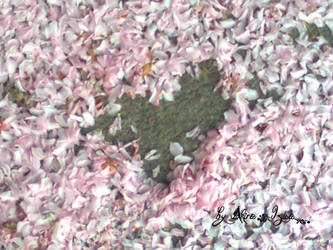 Heart of Spring by Akira-Izusa