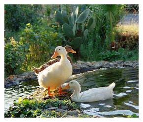 something ducky by vampir