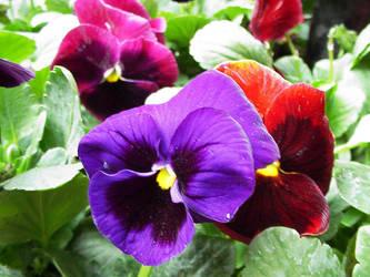 Flowers II by punksafetypin by PurpleDeviants
