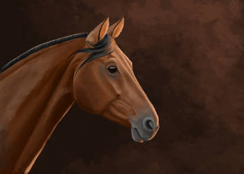 Warmblood portrait by sasnoo