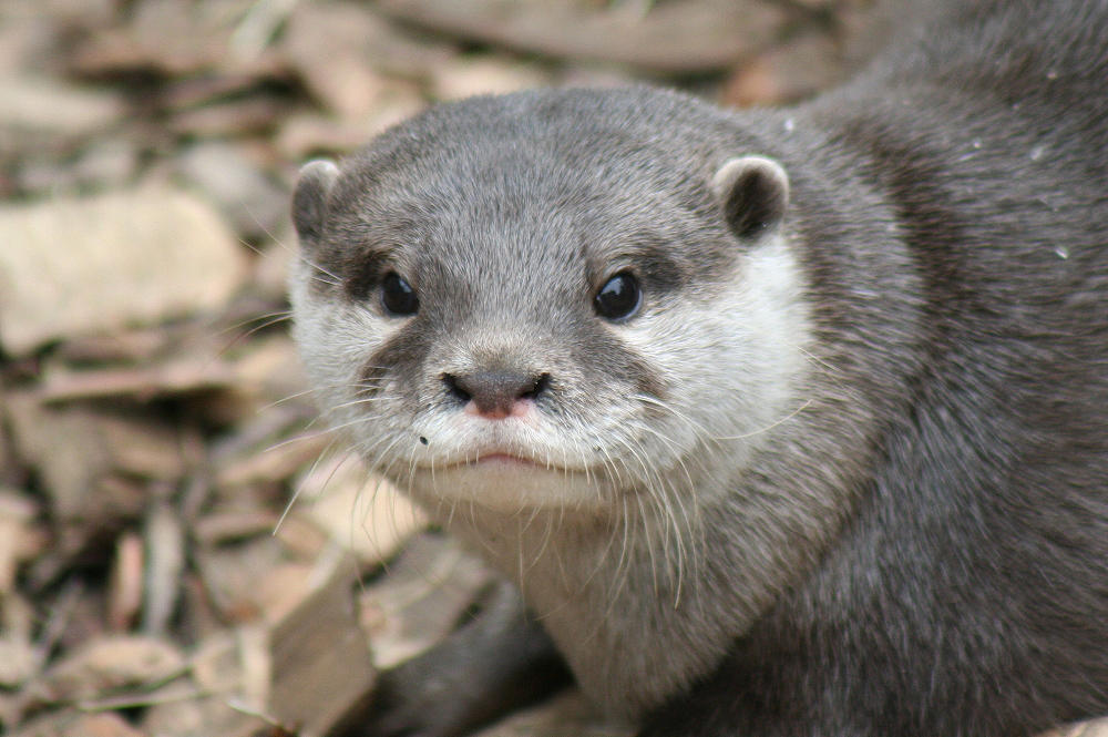 otter face by annlo13