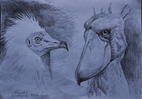 Birds Sketch by gielczynski