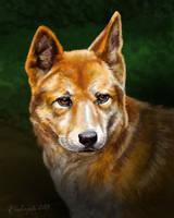 Dingo by gielczynski