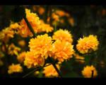 yellow by techdesg