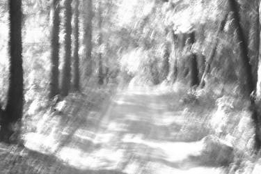 into the woods by BeccaJane1985