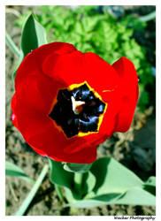 Springtime Star by mardelcielo