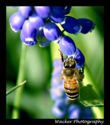 Three Bees by mardelcielo