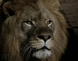 His Majesty by DaytonaBlue64Impala