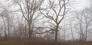 Trees in the Mist by Val-Faustino