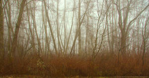 Winter Trees in Fog by Val-Faustino