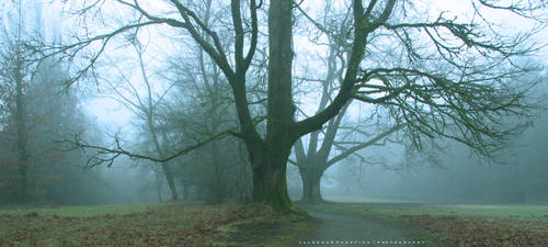 Path Between the Trees by Val-Faustino