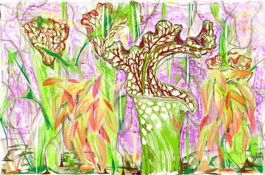 Pitcher Plants2 by Dragonmum