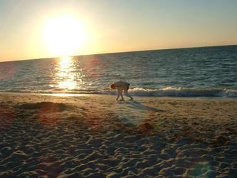 Shell Hunting by akirea